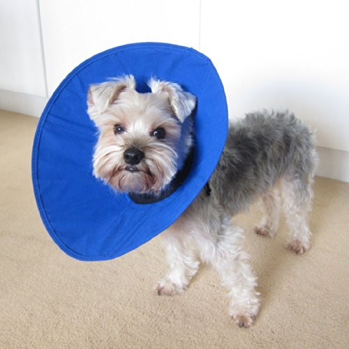 Alfie soft recovery collar