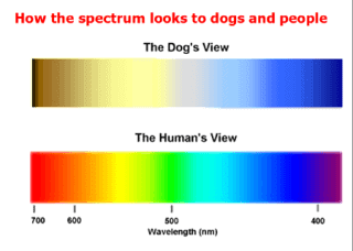 can dogs see green