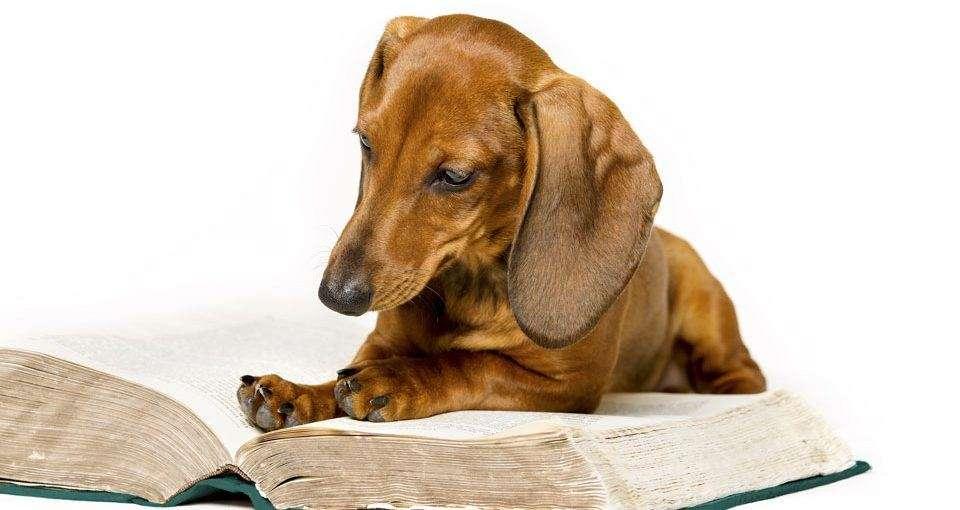 Best Dog Behaviour Books