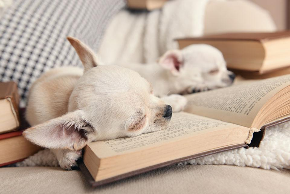 Best Dog Coffee Table Books Top choices Practical Paw The Dog