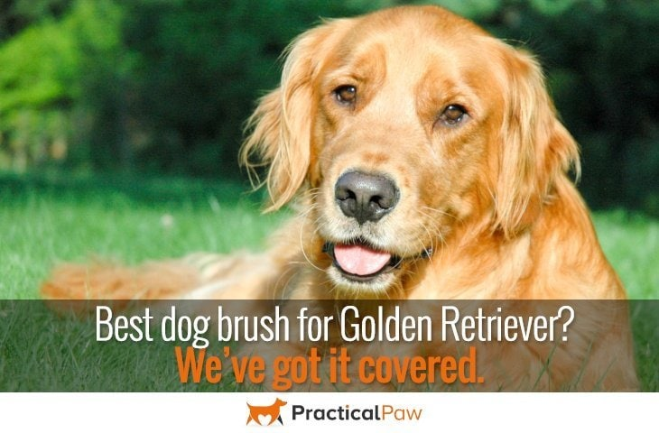 Best brush for golden retriever