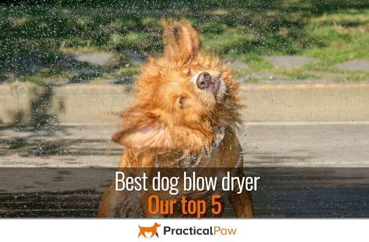 Best dog blow dryer