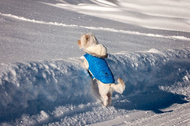 Best dog coats for cold weather winter
