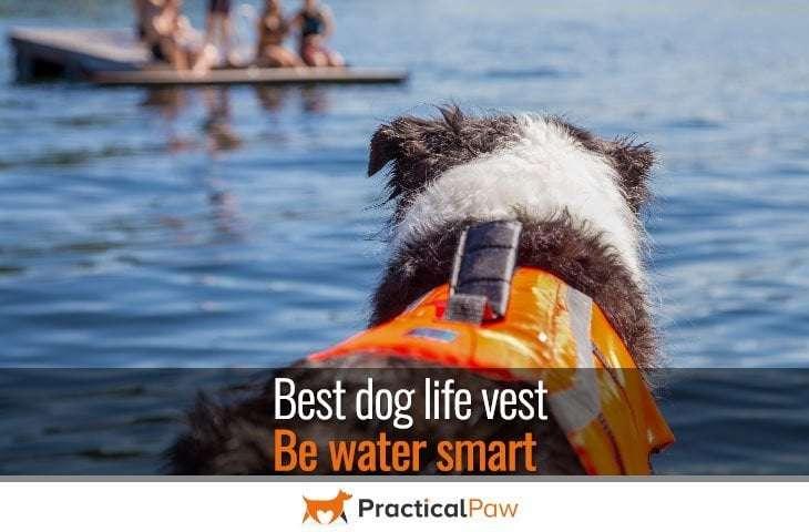 Best dog life vest