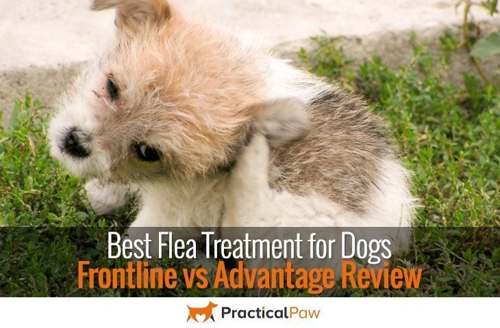 Best flea treatment for dogs, Frontline vs Advantage review - PracticalPaw.com