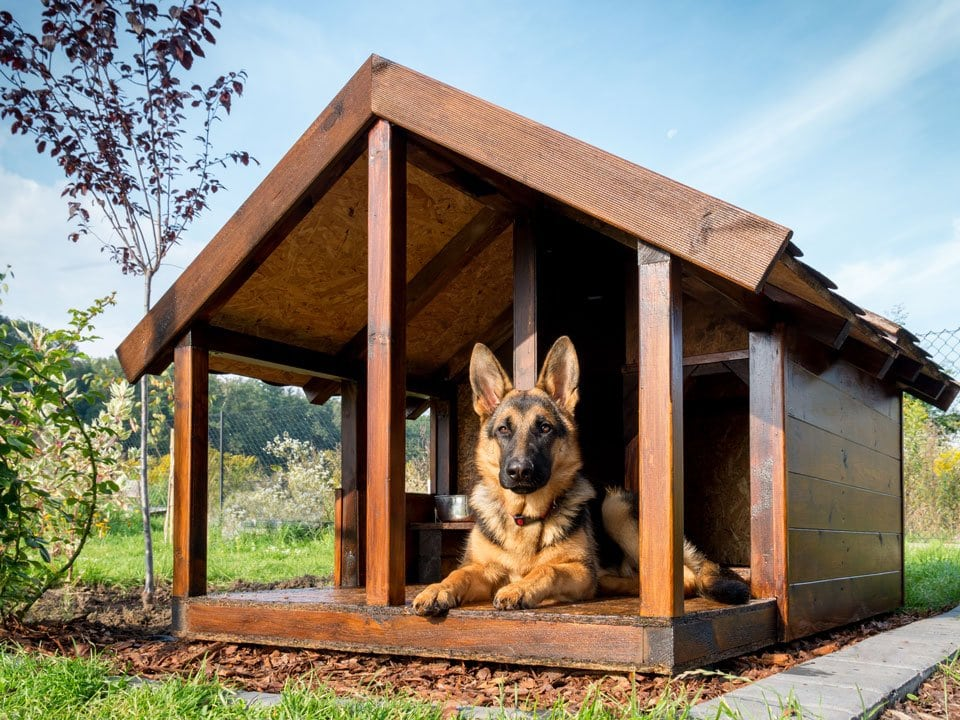 Best insulated dog house for cold weather