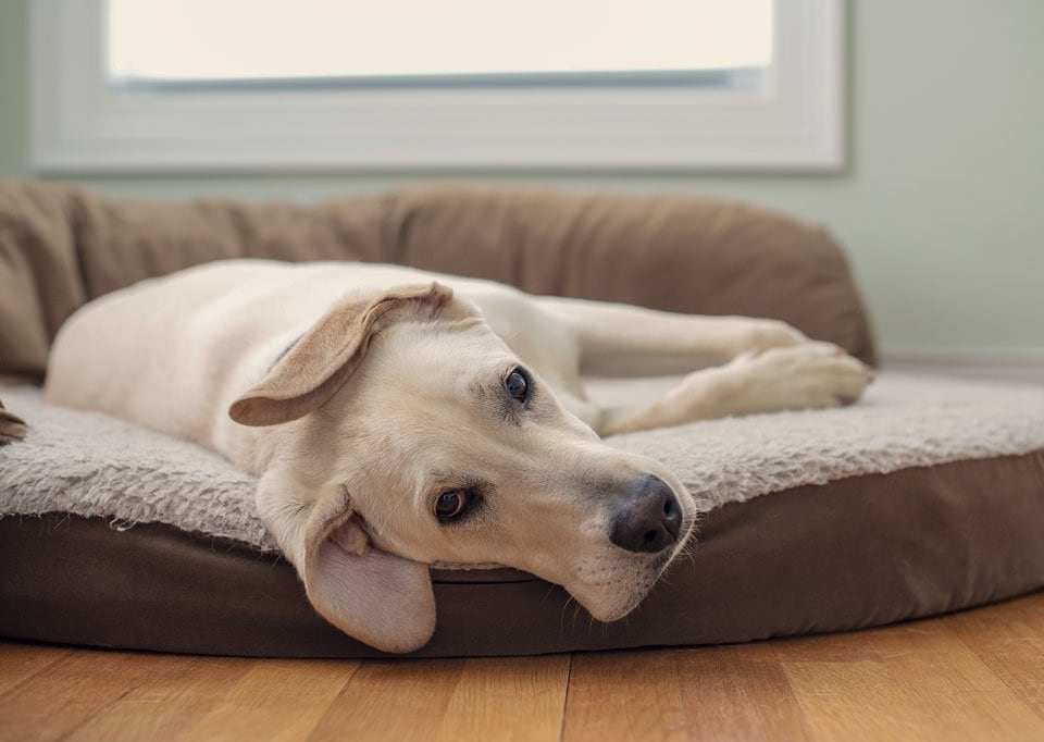 Best-othopedic-dog-beds
