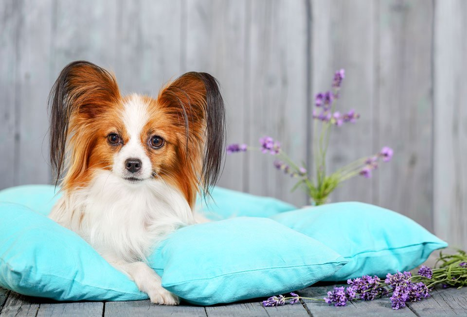 Best-outdoor-dog-beds