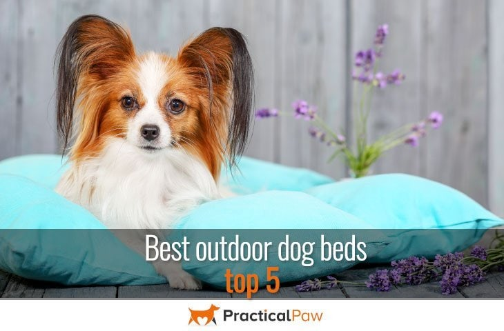 Best outdoor dog beds