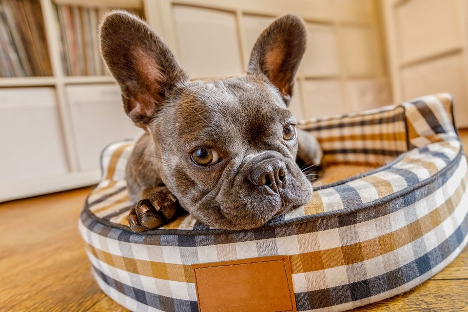 Best-waterproof-dog-beds
