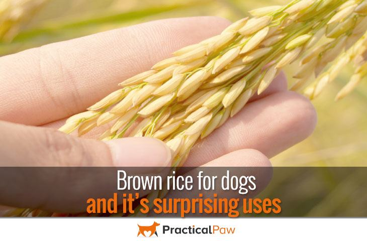 brown rice for dogs