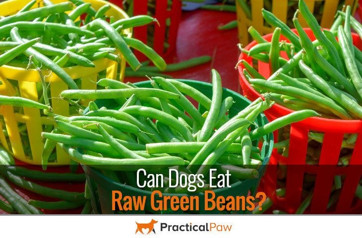 Can dogs eat raw green beans - Practical Paw | The Dog