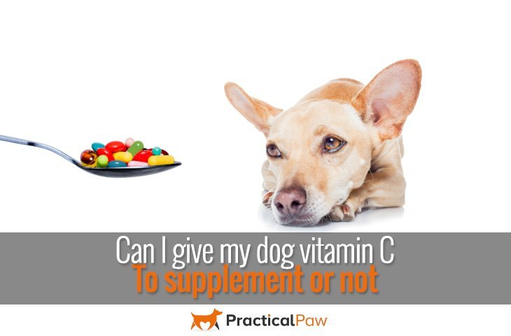 Can I give my dog vitamin C – to supplement or not - PracticalPaw.com