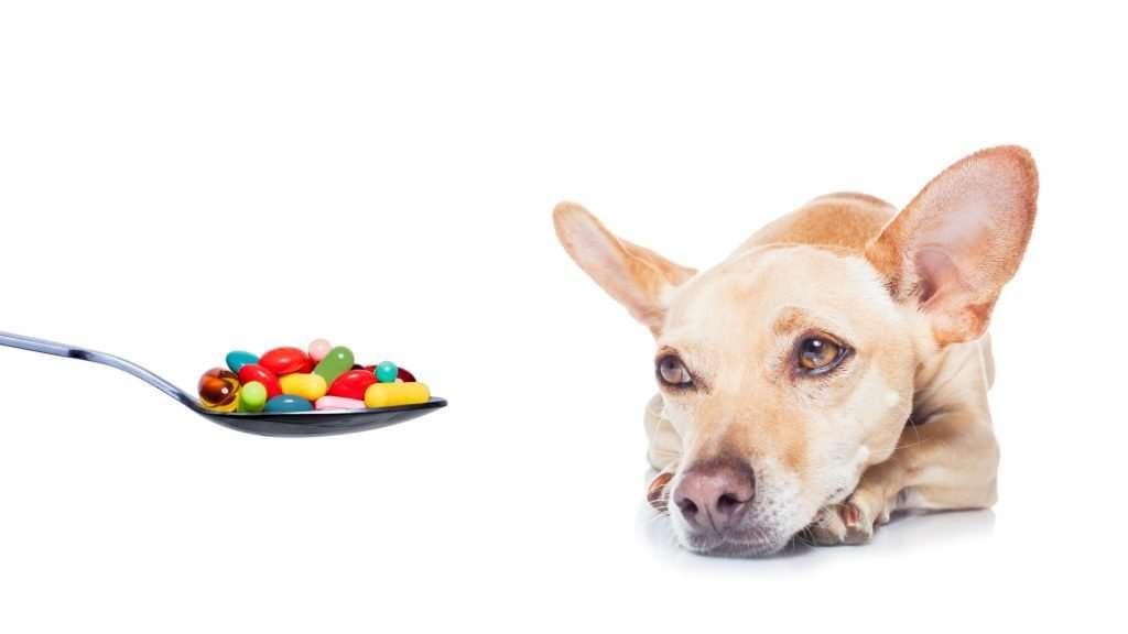Can I give my dog vitamin C