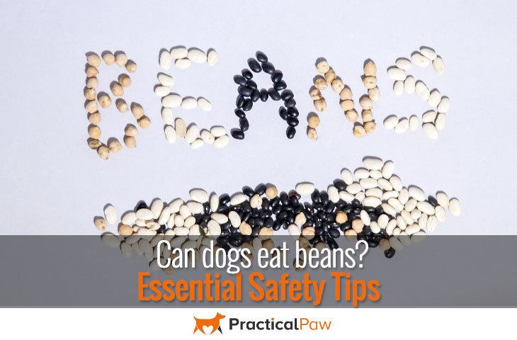 Can dog eat beans?