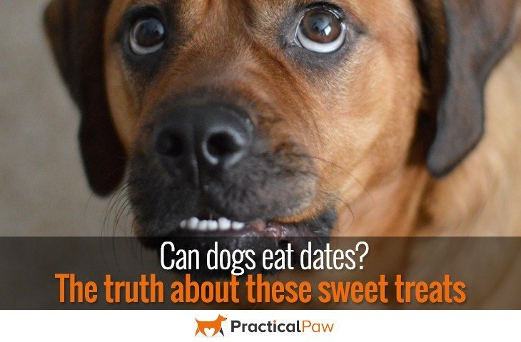 Can dogs eat dates