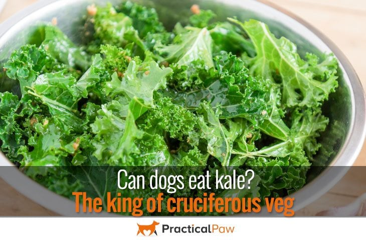 Can dogs eat kale?