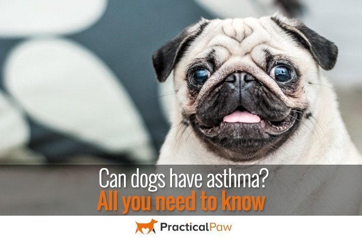 Can dogs have asthma
