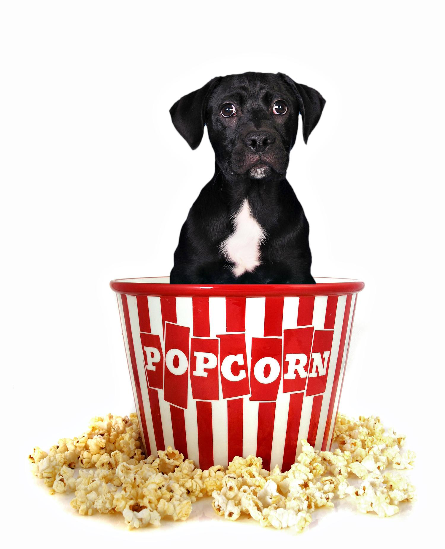Is Popcorn Good For Dogs To Eat