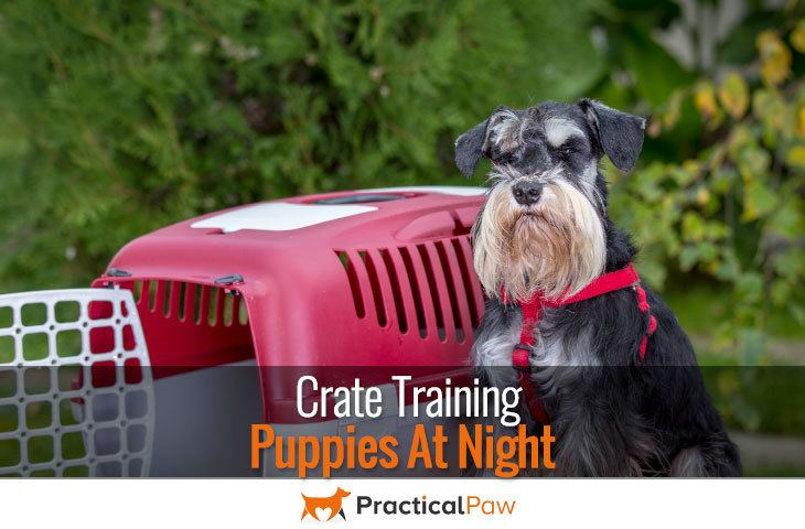 how to crate train a dog at night
