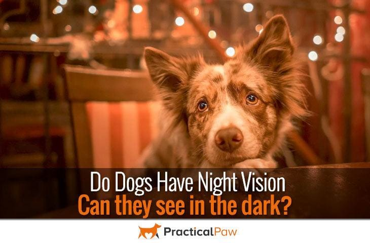Do dogs have night vision?