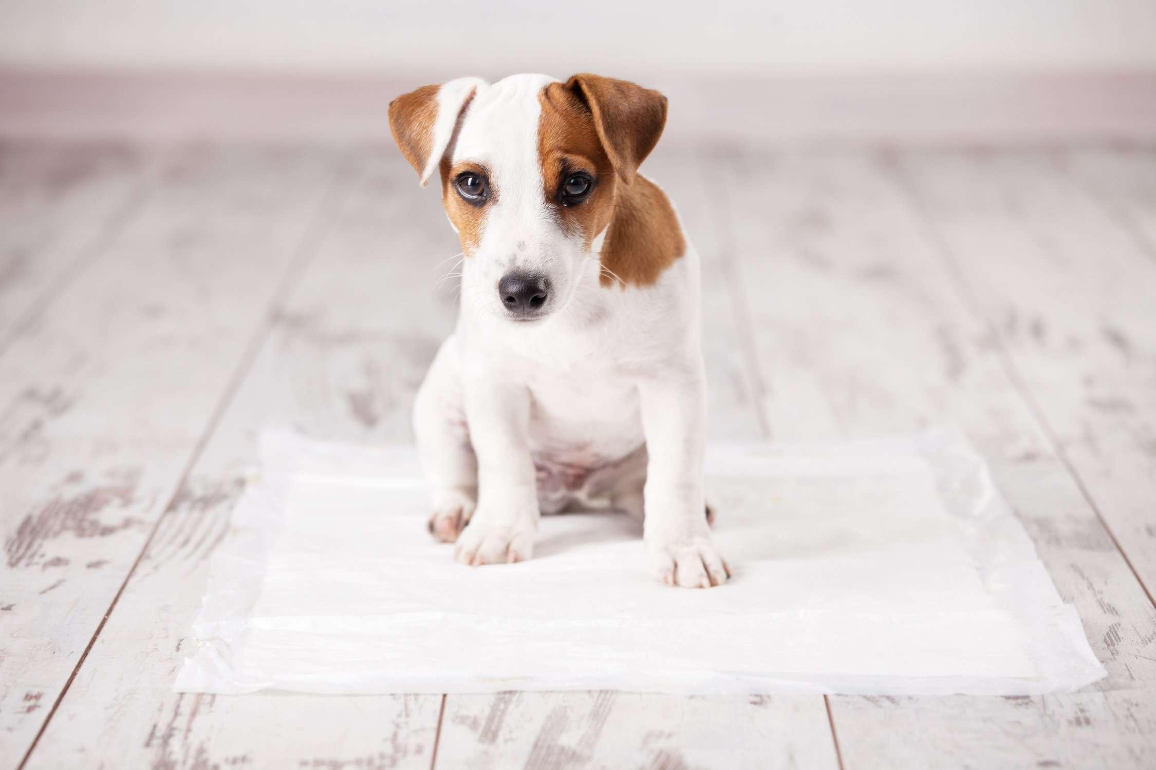 Do puppy pads work