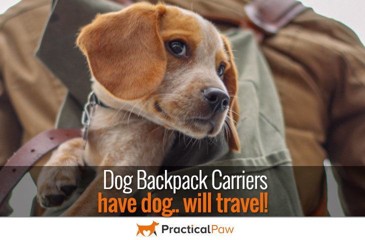 Dog Backpack Carriers - Have dog will travel