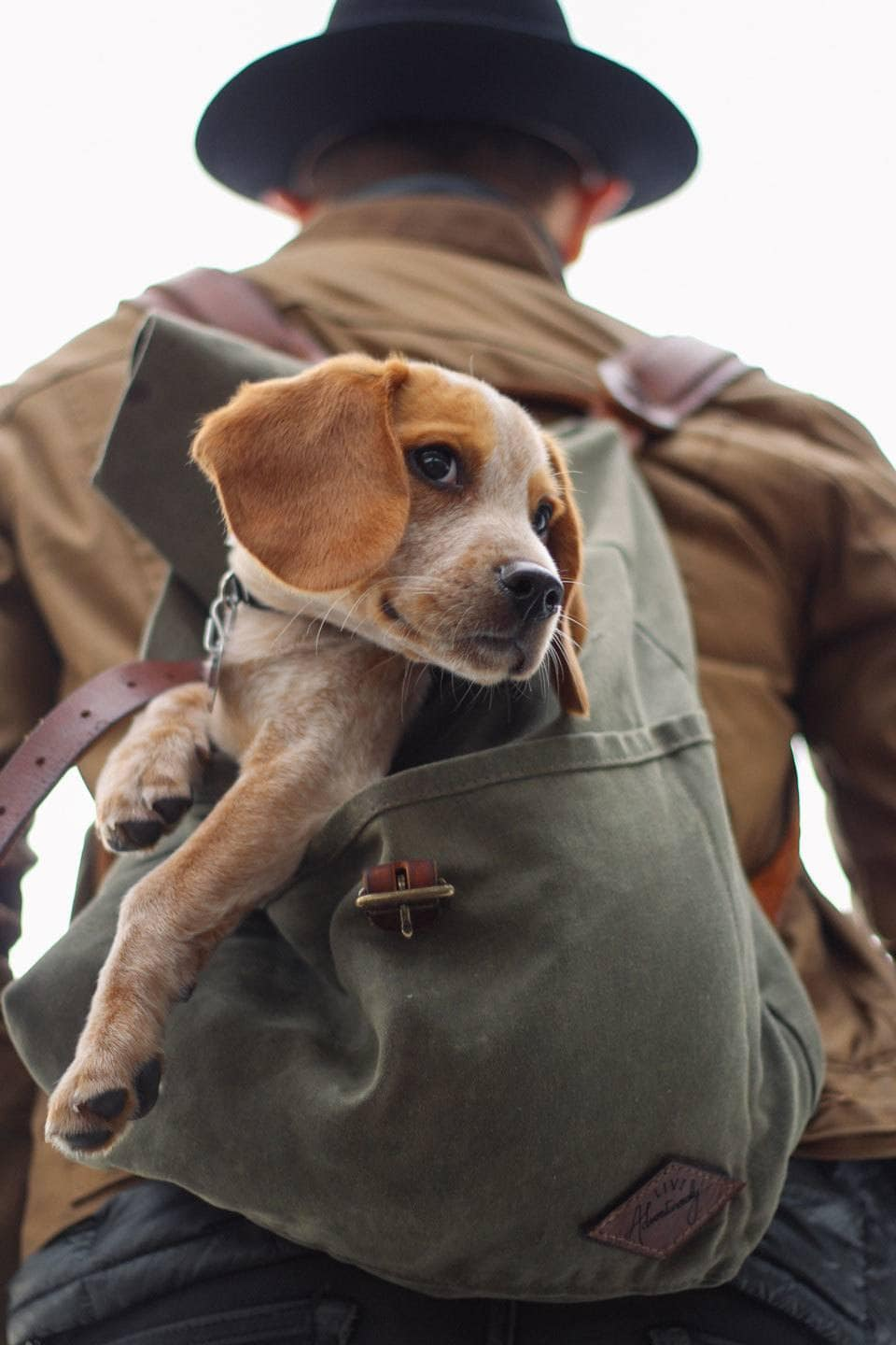 Dog-Backpack-Carriers