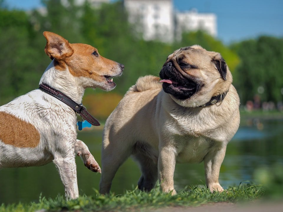 Dog-Parks-pros-and-cons