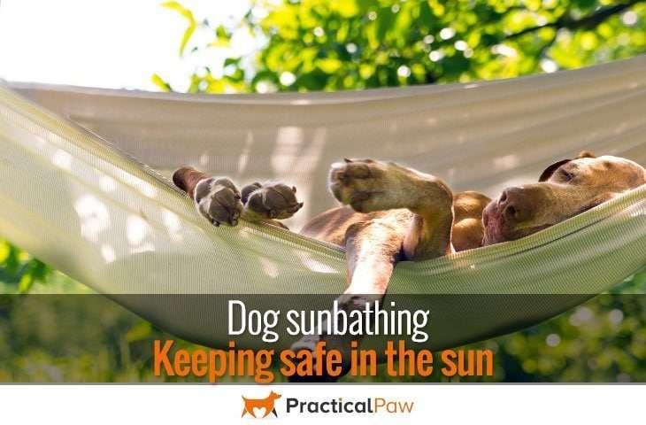 Why Do Dogs Like To Sunbathe