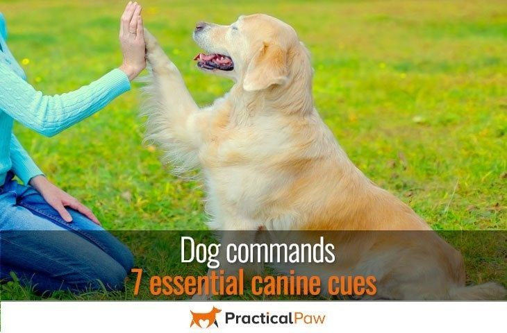 dog commands