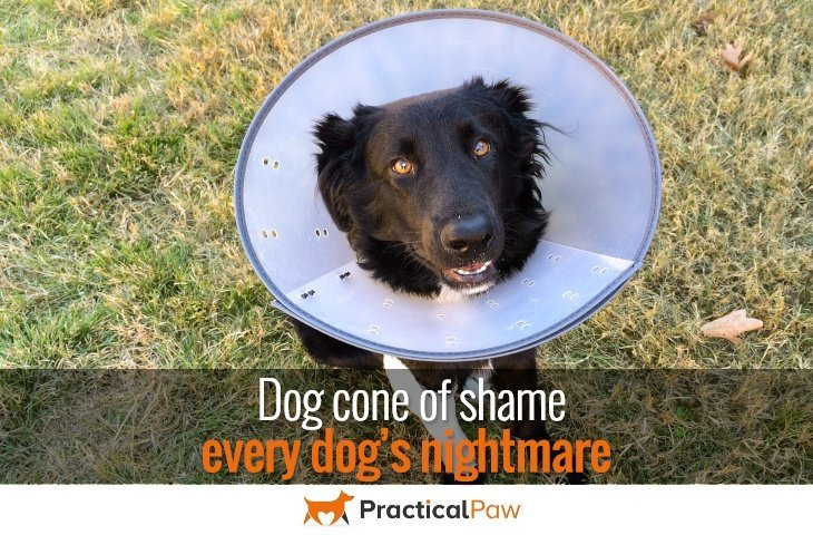 dog cone of shame every dog s nightmare practical paw the dog