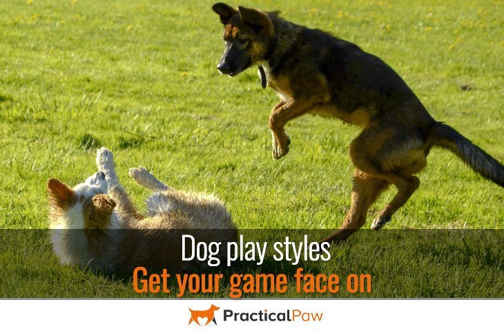 Dog play styles