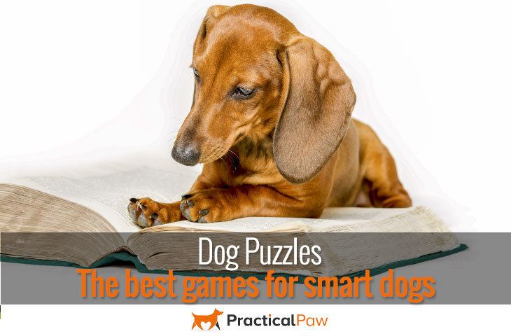 Dog Puzzles The best games for smart dogs