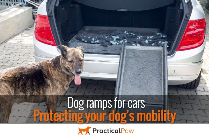 Dog ramps for cars, Protecting your dog's mobility
