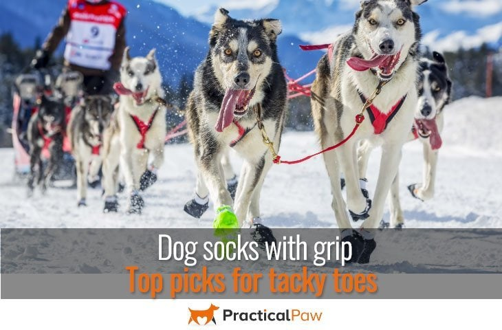 Dog socks with grip