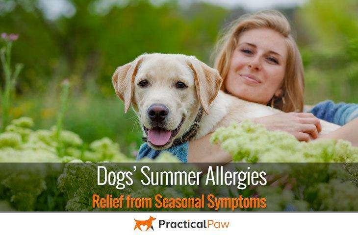 Dog summer allergies