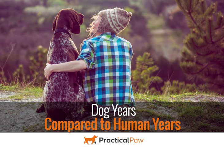 Dog years compared to human years