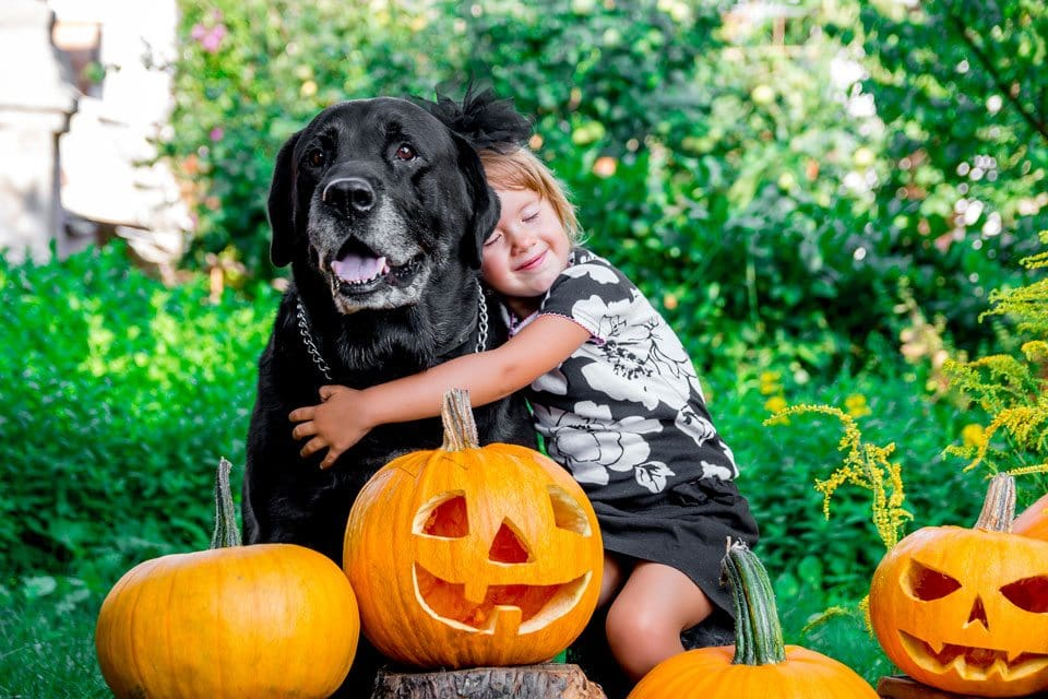 Dogs and Halloween-safety-tips