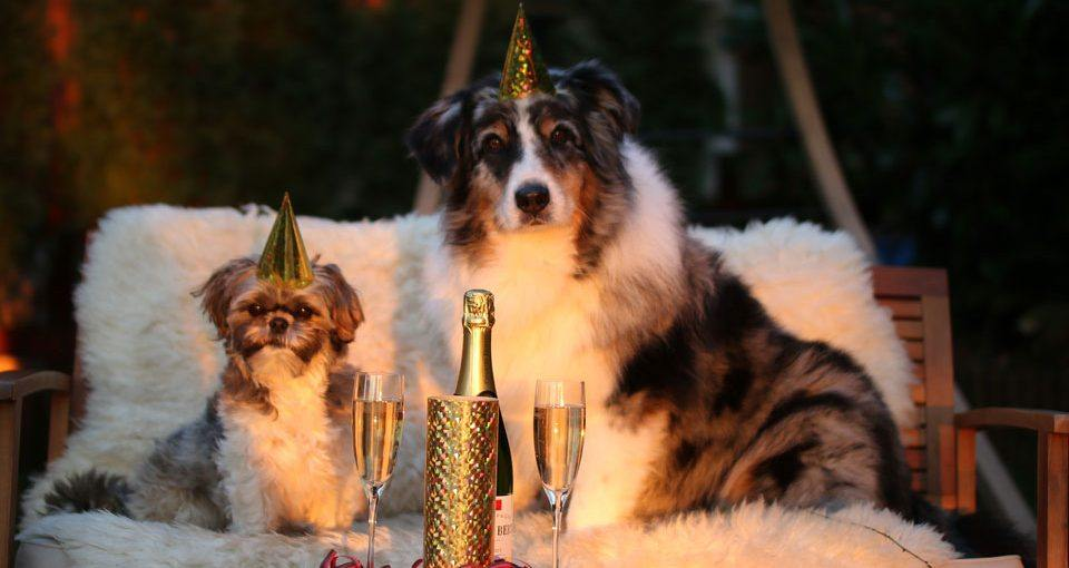 Dogs and New Years Eve