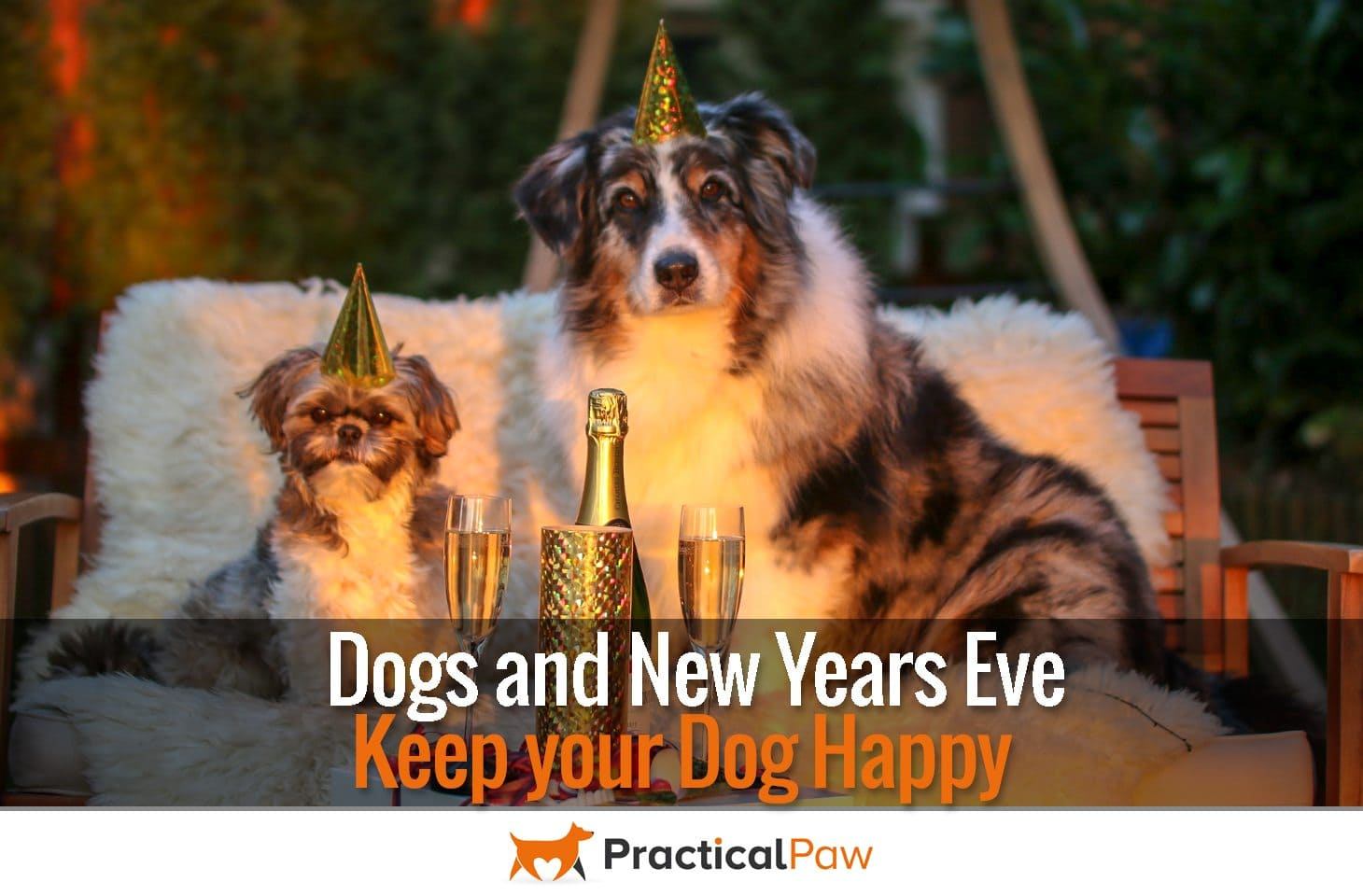 Dogs and New Years Eve - Keep your Dog Happy