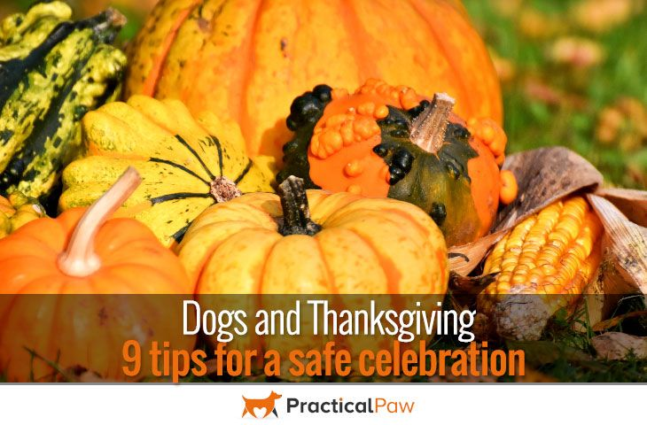 Dogs and Thanksgiving – 9 tips for a safe celebration