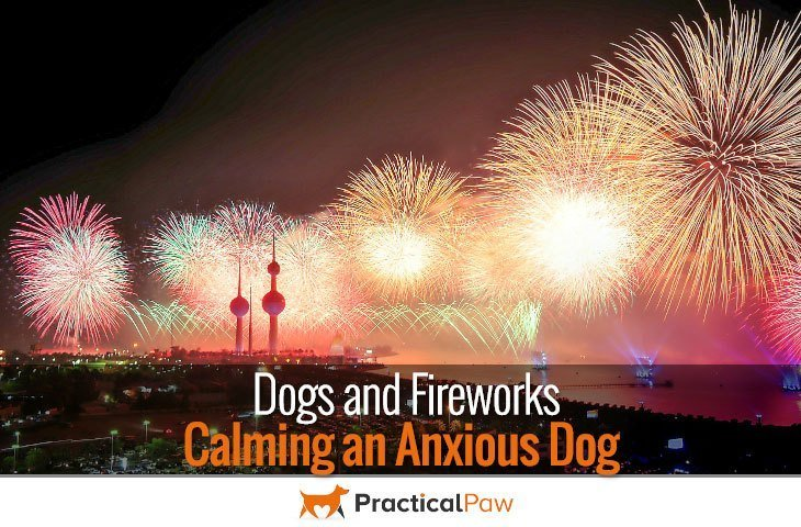 Dogs and Fireworks - Calming an anxious dog