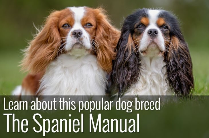 Types of Spaniel - The Spaniel Manual
