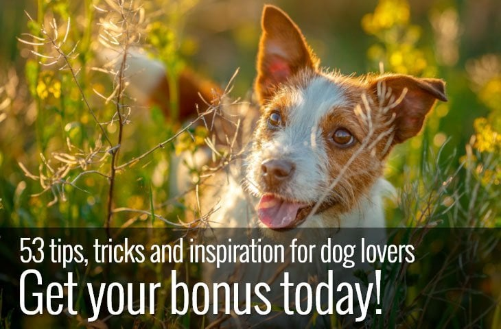 ebook dog lover tips