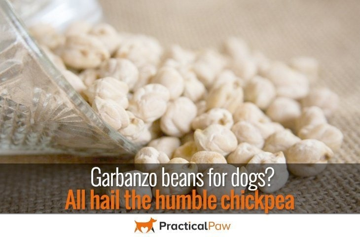 Garbanzo beans for dogs