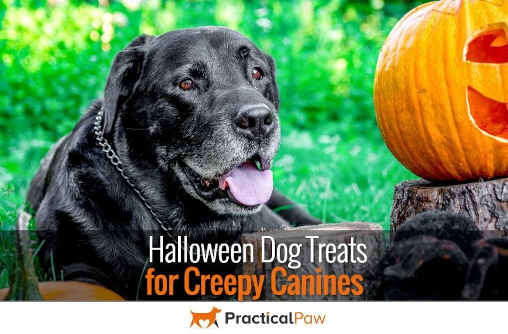 Halloween Dog Treats for Creepy Canines