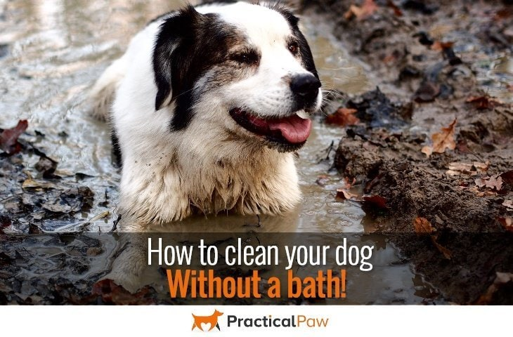 how to clean your dog without a bath