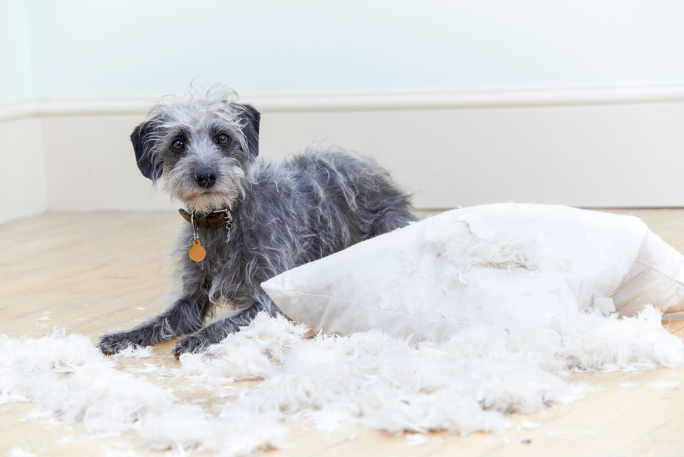 Indestructible-dog-beds