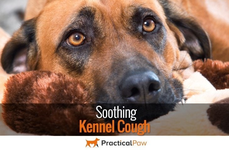 Soothing Kennel Cough